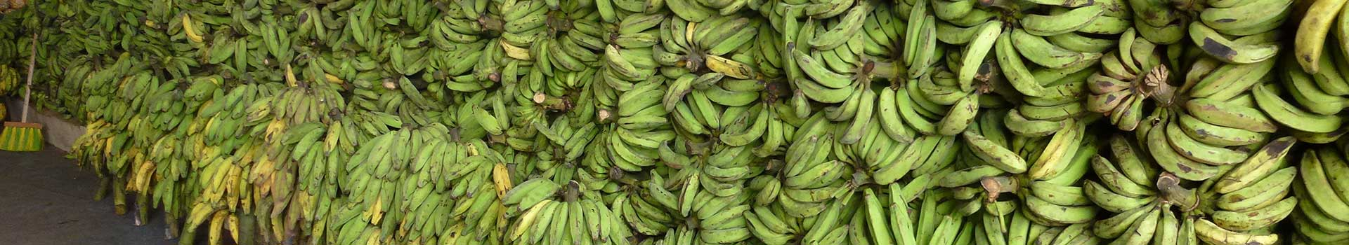 advocaat Internationale handel bananen fruit agf international trade fruit bananas noten nuts